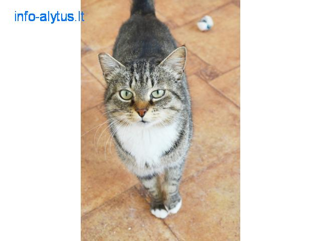 Gyvūnų gerovės tarnyba PIFAS